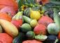 Nos légumes du potager