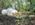 bulle des chênes nuit insolite