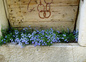 fleurs autour de la maison