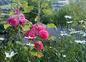 jardin de la propriété