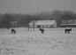 Aux Feuillantines sous la neige