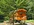 La roulotte en lisière du bois