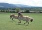 Nos chevaux bondissants