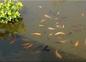 Nos poissons