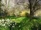 Jardin en printemps