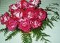 quelques roses de mon jardin