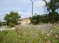 la prairie fleurie et la maison