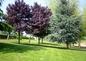 Parc jardin